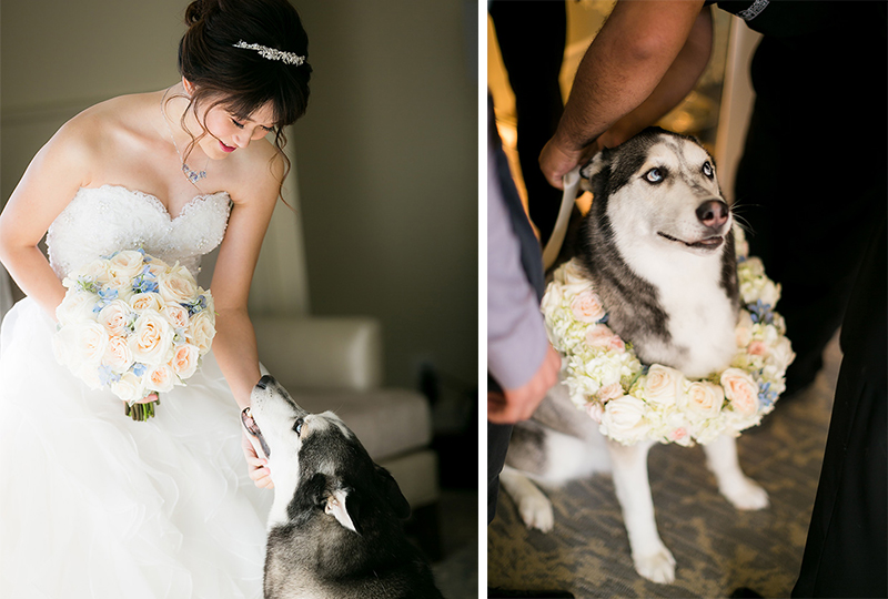Lovely bouquet made from top wedding florists and flowers wreath around dog.